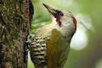 バードウォッチング「鳥見にチャレンジ」